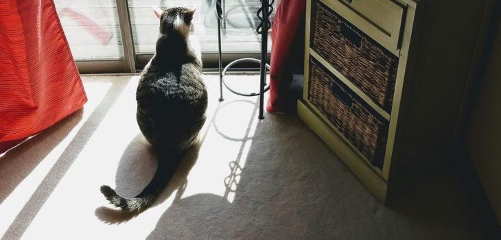 Cat by window - Nadia